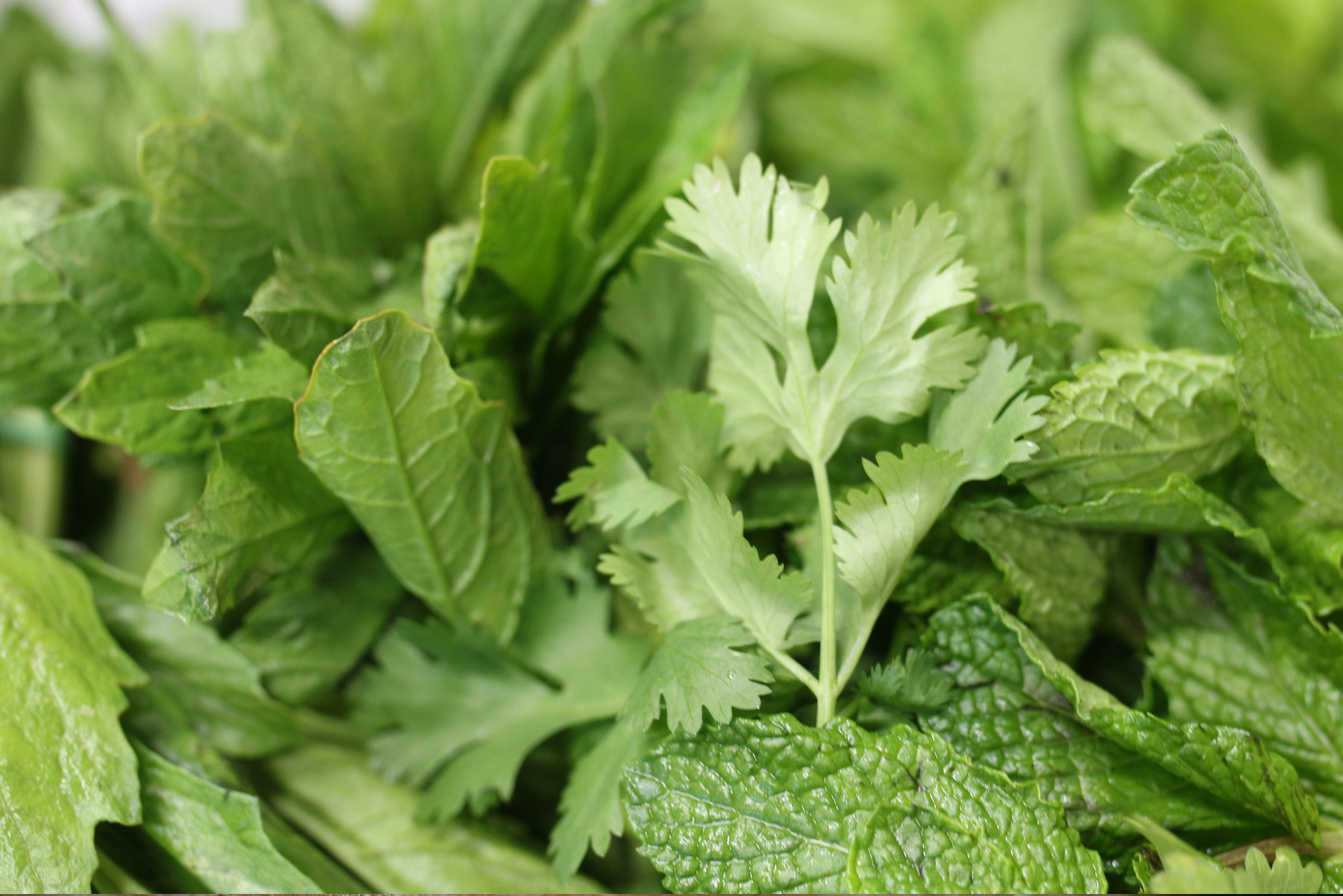 We are distributors of fresh Herbs