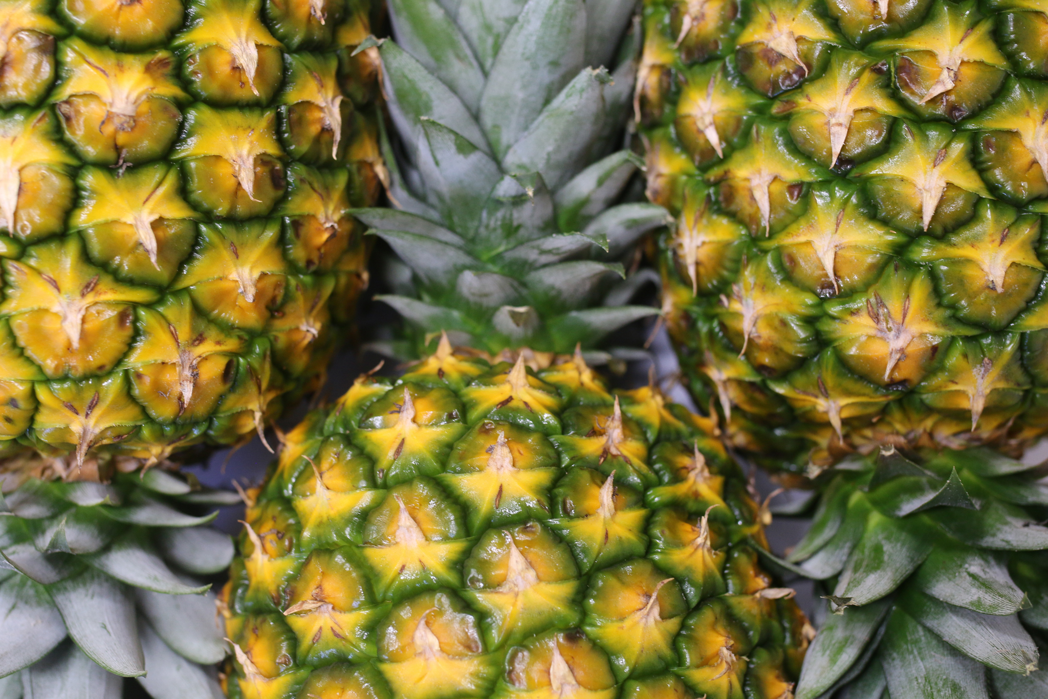 Distributor of Fresh Pineapples