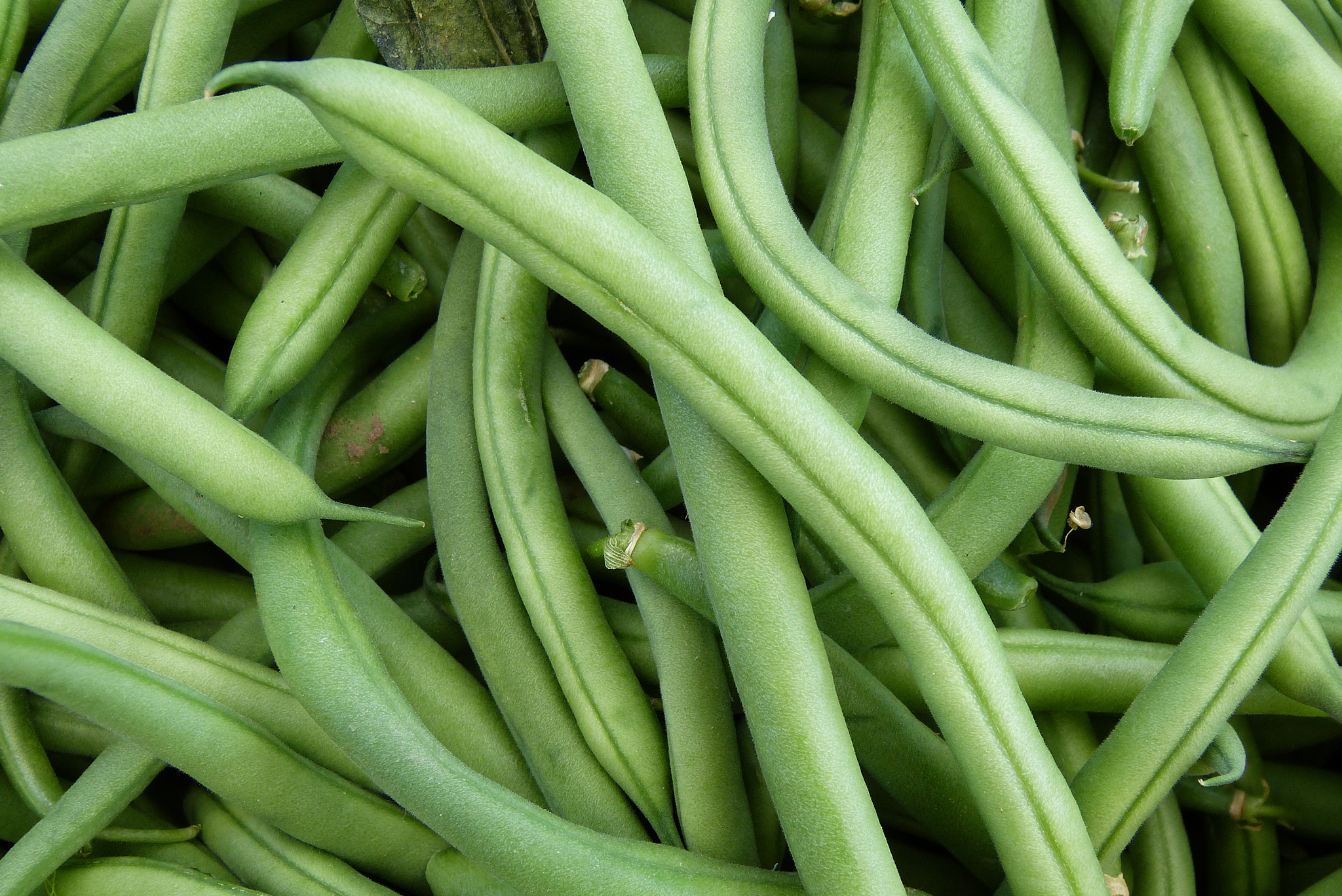 Green Beans Distributors
