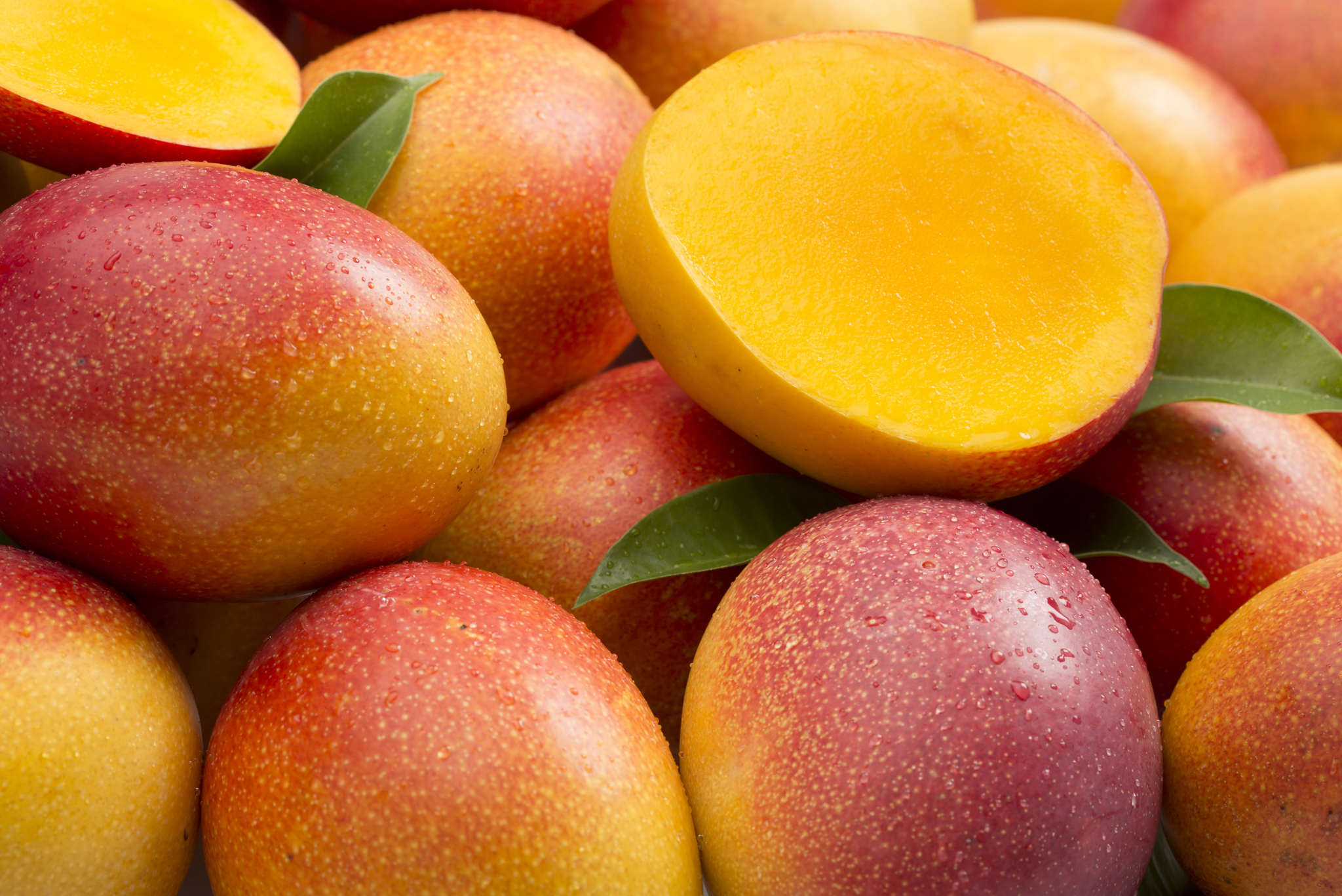 Mango and Stone Fruits Distributors